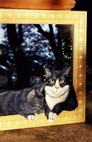 10 Cat Mirror thumbnail