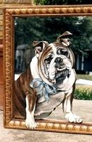 20 Bulldog thumbnail