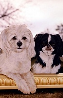23 Three family dogs thumbnail