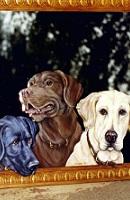26 Three Labradors thumbnail